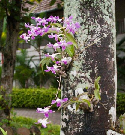 เลมอน ทรี เว็มบานาด เลค รีสอร์ท มูฮัมมา:                   Orchids
