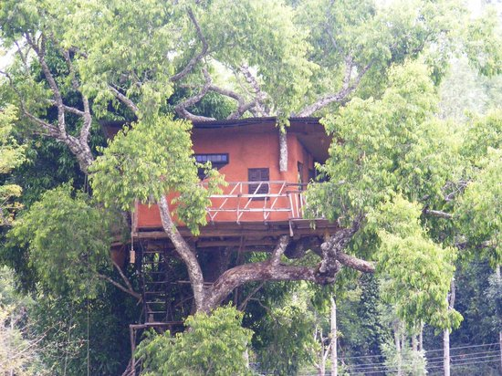 Elephant Valley Eco Farm Hotel :                   tree house