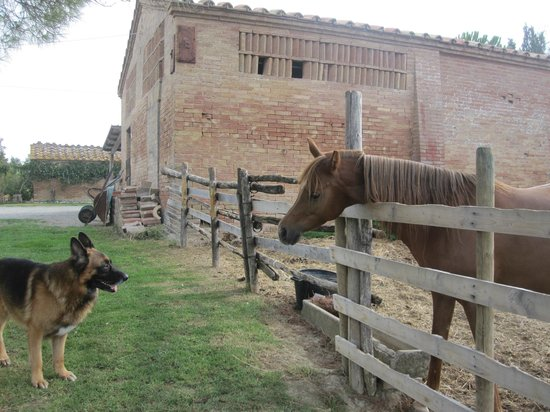 Agriturismo Fattoria Armena:                   Standoff at the corral