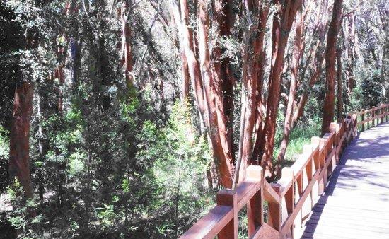 Bosque de Arrayanes:                   pasarela mágica