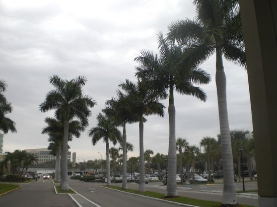 Bay Harbor Hotel: Beautiful palms lining the driveway to main entrance