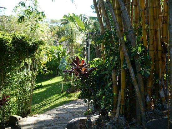 Pura Vida Hotel :                   Garden path to the Rain Forest Casita