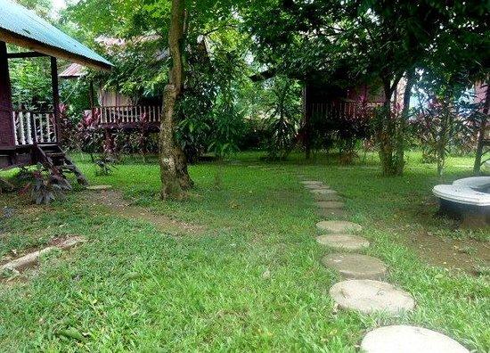 Chez Mango:                   Une vue du jardin
