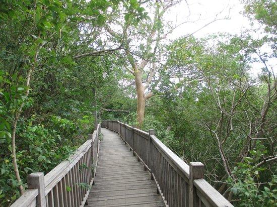 Aqua Wellness Resort:                   Walkway in the tree tops