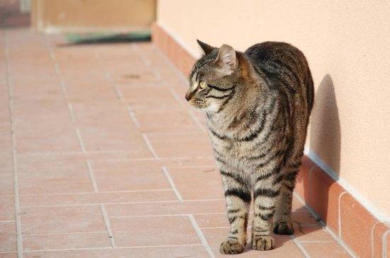 Agriturismo Lama di Valle Rosa: Gatto