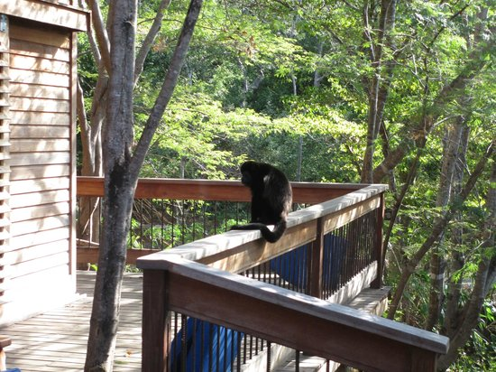 Aqua Wellness Resort:                   monkey on our balcony