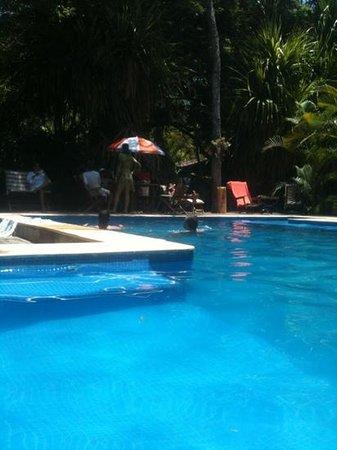 Pousada Hibisco:                   Uma das melhorese piscinas que ja vi!