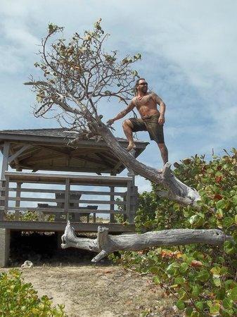 Saint-Martin, St. Maarten:                   picnic pinel