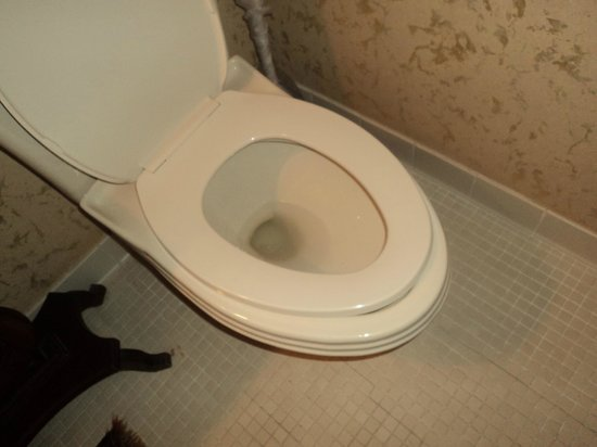 Bluff View Inn:                   Regular toilet seat on an elongated bowl