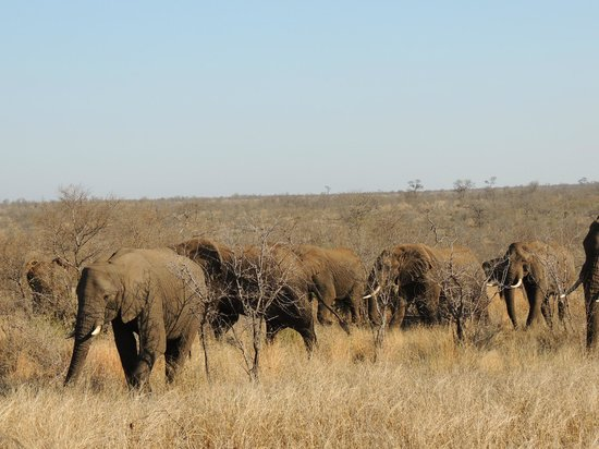 Singita Lebombo Lodge:                                     A herd of elephants saying hi!