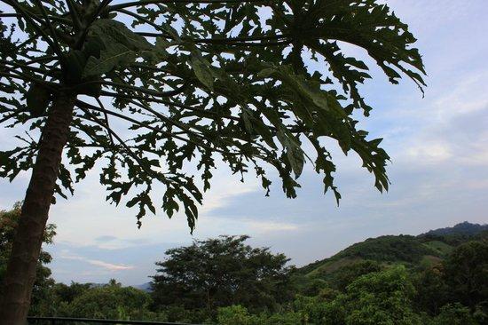 El Porton Verde:                   Overlooking the farm at dusk