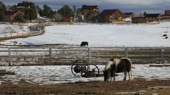 Zion Mountain Ranch:                                     Ponies, Buffalo, and Cabins