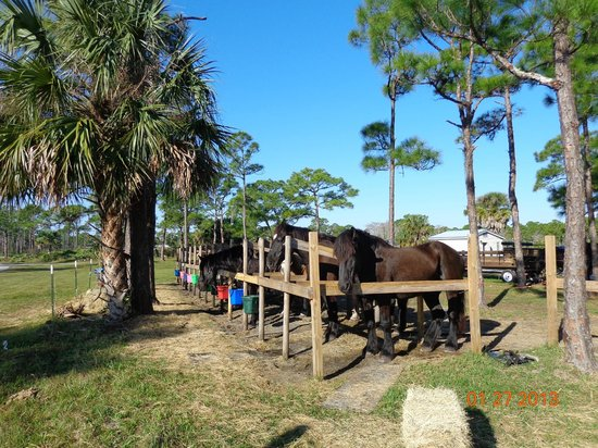 Hobe Sound National Wildlife Refuge: Horse rentals at the park