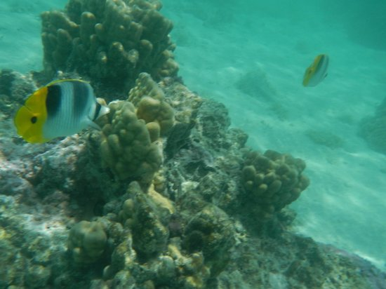 Conrad Bora Bora Nui:                   Snorkeling at the resort  *Highly recommend you bring a waterproof digital cam