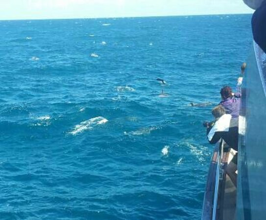 Butler's Swim With Dolphins:                   Common Dolphins sighted with babies