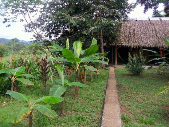 Rio Drake Farm :                   the lodge