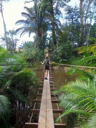 Rio Drake Farm:                   canopy bridge