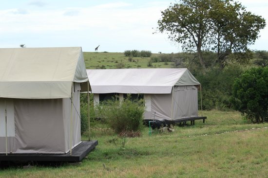 Mara Eden Safari Camp:                   tents
