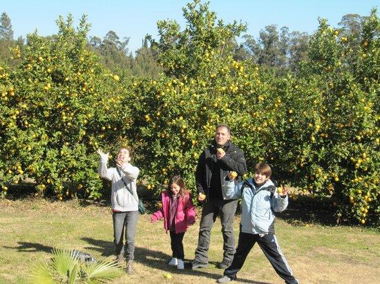 La Casa de los Limoneros: limoneros