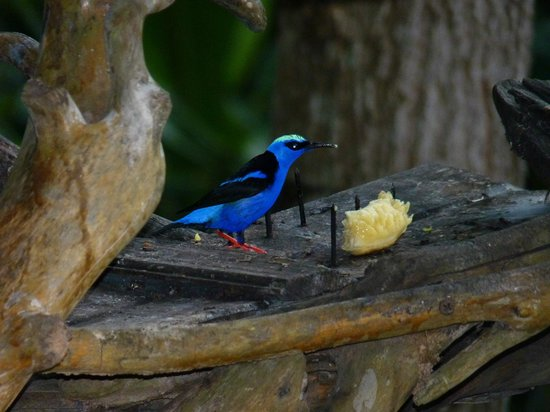 Lookout Inn Lodge:                                     Beauty at the feeder
