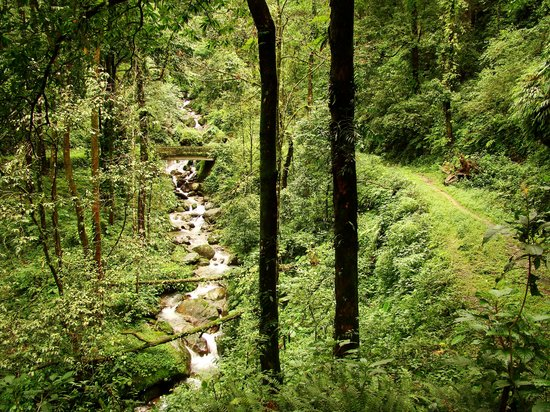 Darjeeling District, Индия:                   Suntaley Khola