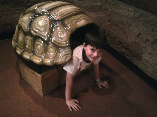 Jackson, MS: In the turtle shell