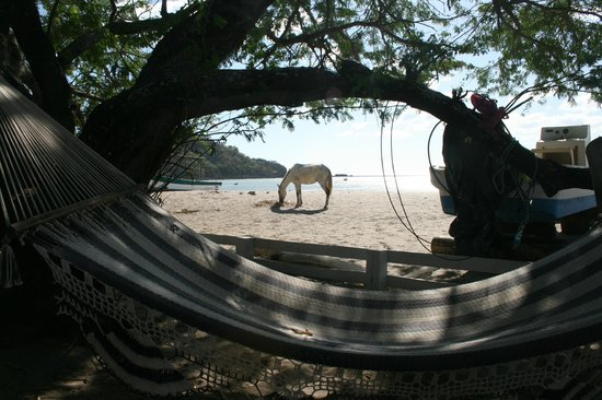 Dale Dagger Surf Lodge :                   Siesta time, shady with a view of the beach
