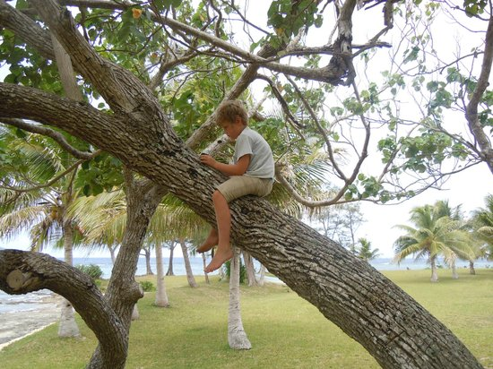 Aquana Beach Resort:                                     Climbing trees is not illegal