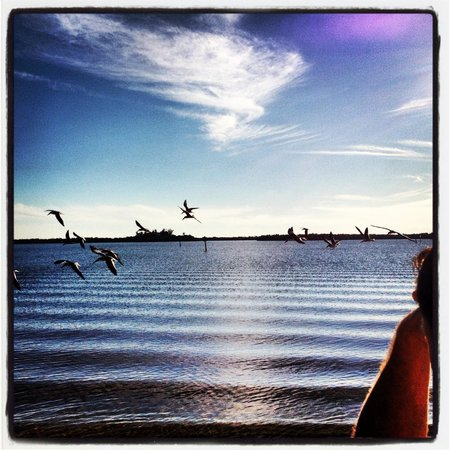 Port Charlotte, Floryda:                                     Birds in flight