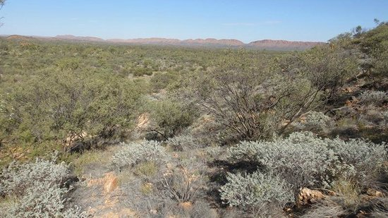 Outback Quad Adventures Day Tours: View across the desert