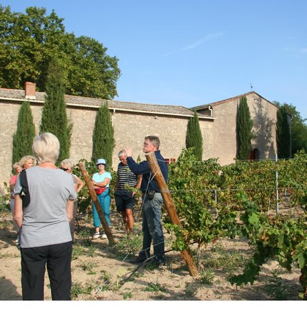 Languedoc Wine Tours