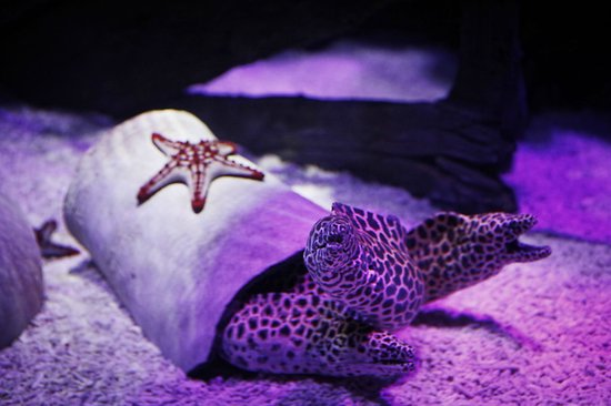 Lido di Jesolo Sea Life Aquarium : Vasca delle Murene