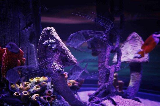 Lido di Jesolo Sea Life Aquarium : Relitto sommerso