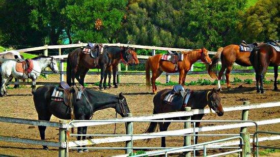 Ace-Hi Ranch: Horses