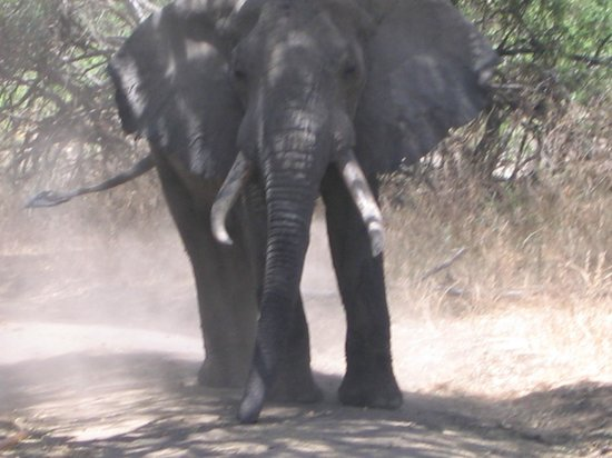 Full-Day Lake Manyara National Park Tour:                   Decided to bully me and charge