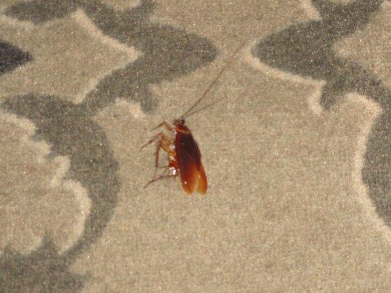 Darkhill Hotel:                                                                         Altro scarafaggio ucciso