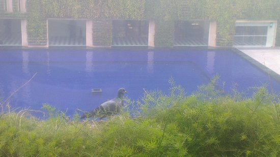 The Oberoi, Gurgaon: Pigeons on Window
