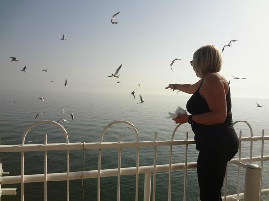 Ron Beach Hotel: My wife feeding the seagulls