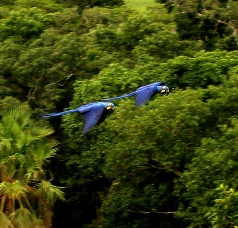 Araras Pantanal Ecolodge:                   Araras
