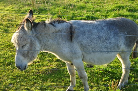 Clearwater Bed and Breakfast:                   Donkey