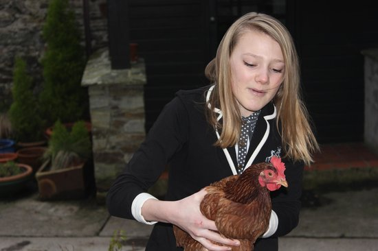 Oldaport Farm Cottages:                   Sophie (the chicken) will capture your heart - even if you don't like chooks!