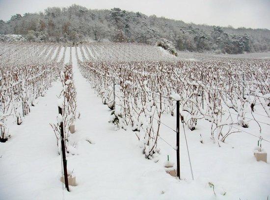 Champagne Domi :                   Les vignes sous la neige