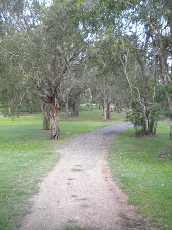 Gold Coast Holiday Park & Motel:                   Road leading out of the grounds