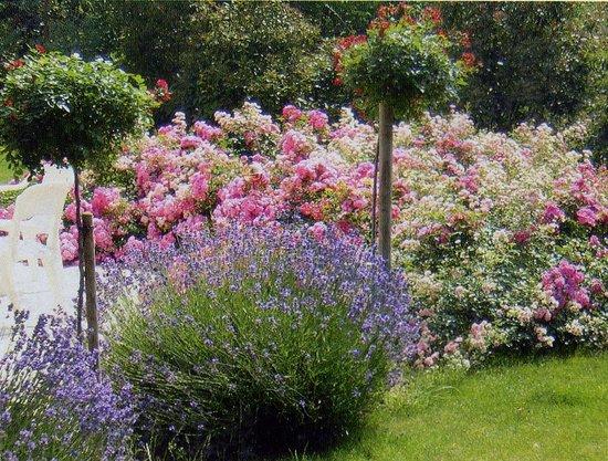 Accueil photo de les colombes maisons laffitte tripadvisor - Location maison jardin ile de france colombes ...