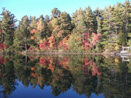 Lake Lauzon Resort & Marine: Fall view from Cabins