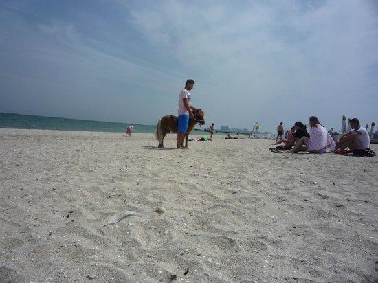 Mamaia Beach:                   Une petite balade en poney sur la plage de Mamaia ?