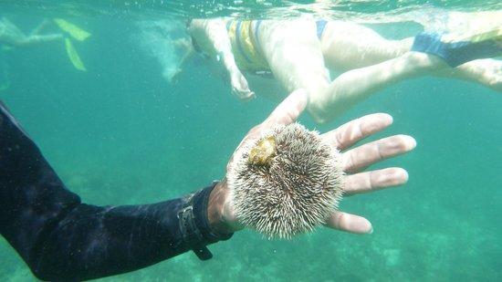 Sunscape Splash Montego Bay :                   Vie sous-marine