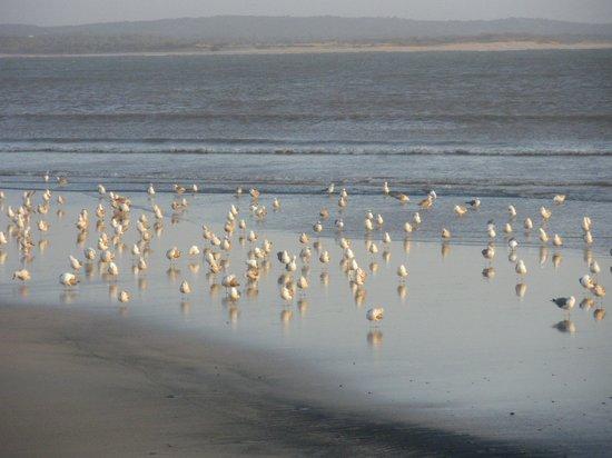 Essaouira Beach: Gabbiani sulla spiaggia di essaouira