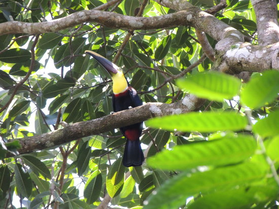 La Cusinga Eco Lodge: Toucan