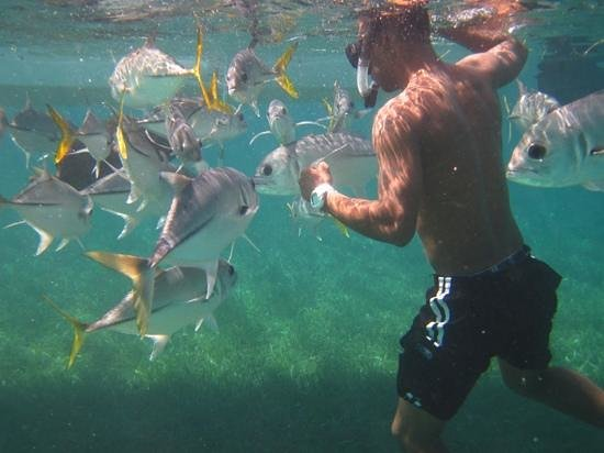 Tranquility Bay Resort: jamaal with the fishes